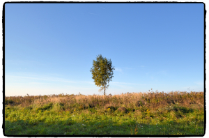 Góra Żar drzewo