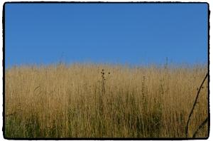 żary łąka