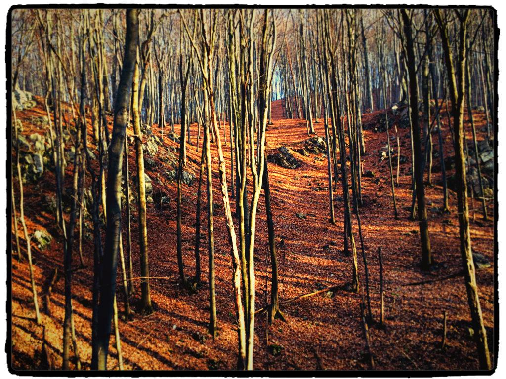 las Dolina racławki