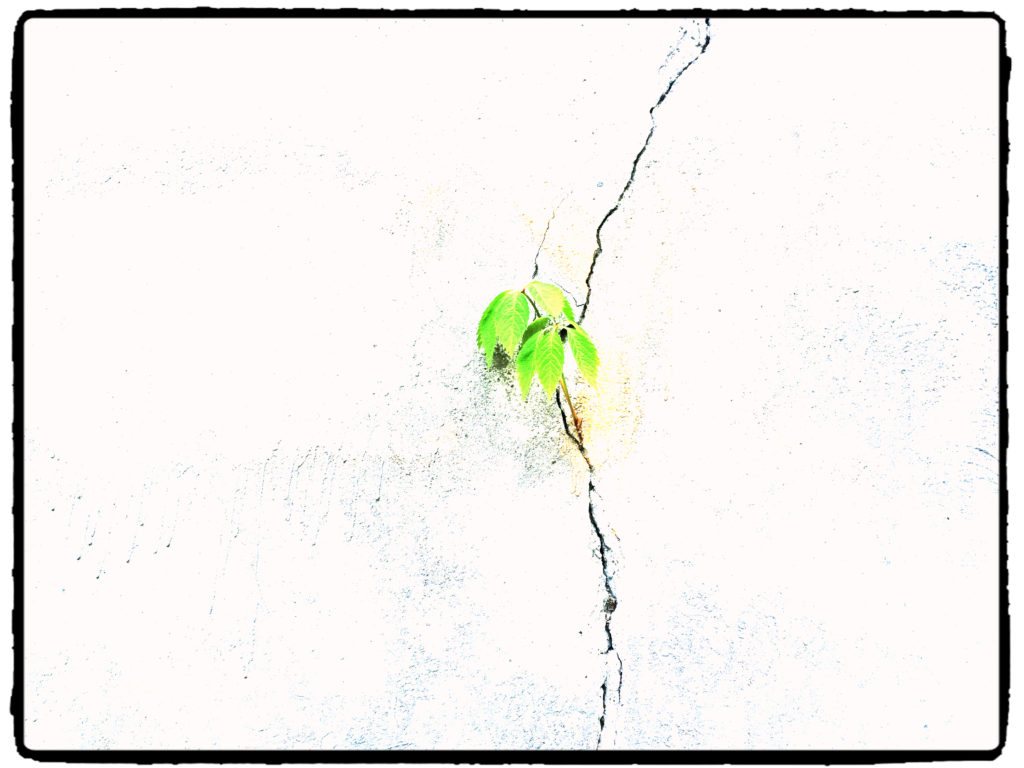 kameduli mur